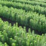 Deep learning algorithm can identify seedlings
