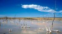 CSIRO wins award for using space tech to solve UN land degradation challenge