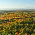 Advancement in Remote Sensing for Large-scale Forest Health Assessment