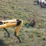 Remotely operated robot herds NZ sheep