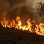 German IoT start-up wants to help prevent forest fires