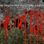 Stems & Branches Segmented using Deep Learning