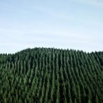AI tool for forestry sequestration attracts backing