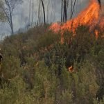 Using drones for early bushfire detection