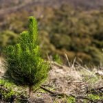 Changes to forestry provisions in the ETS